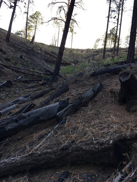 Santa Fe Municipal Watershed Cleared and Burned